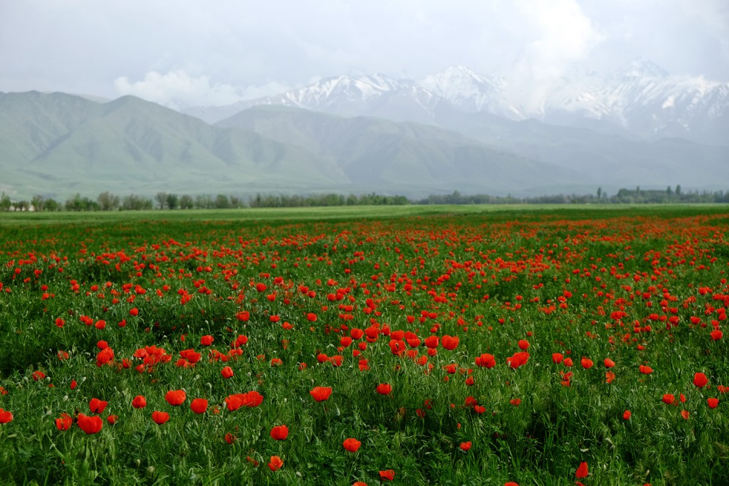Jibiek's favorite spot are these gorgeous mountains that surround Bishkek.